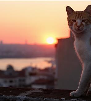 Kedi. Slaptas kačių gyvenimas