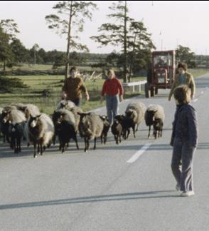 Forės salos gyventojai, 1979 (Skalvija)